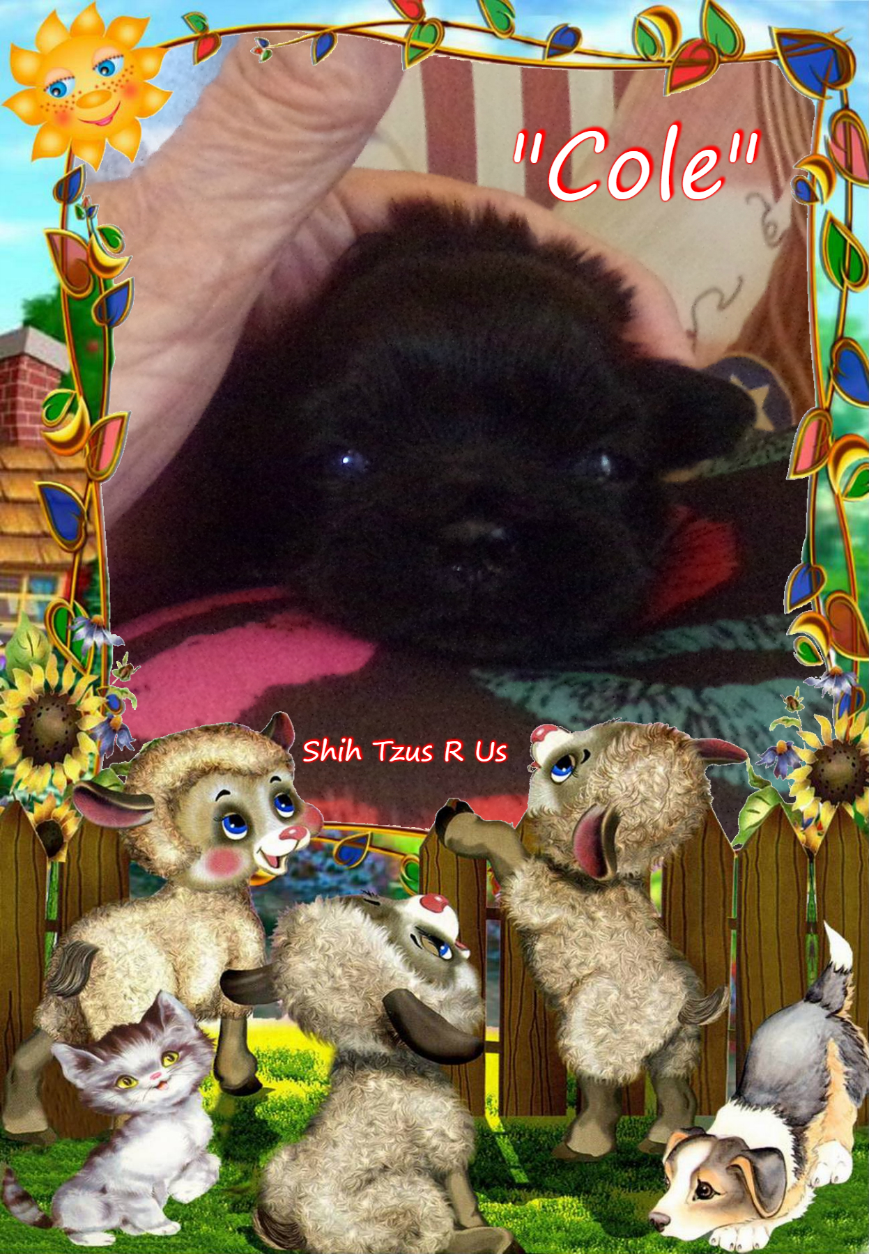 Shih Tzu R Us Please Use The Contact Us Form On The Contact Us
